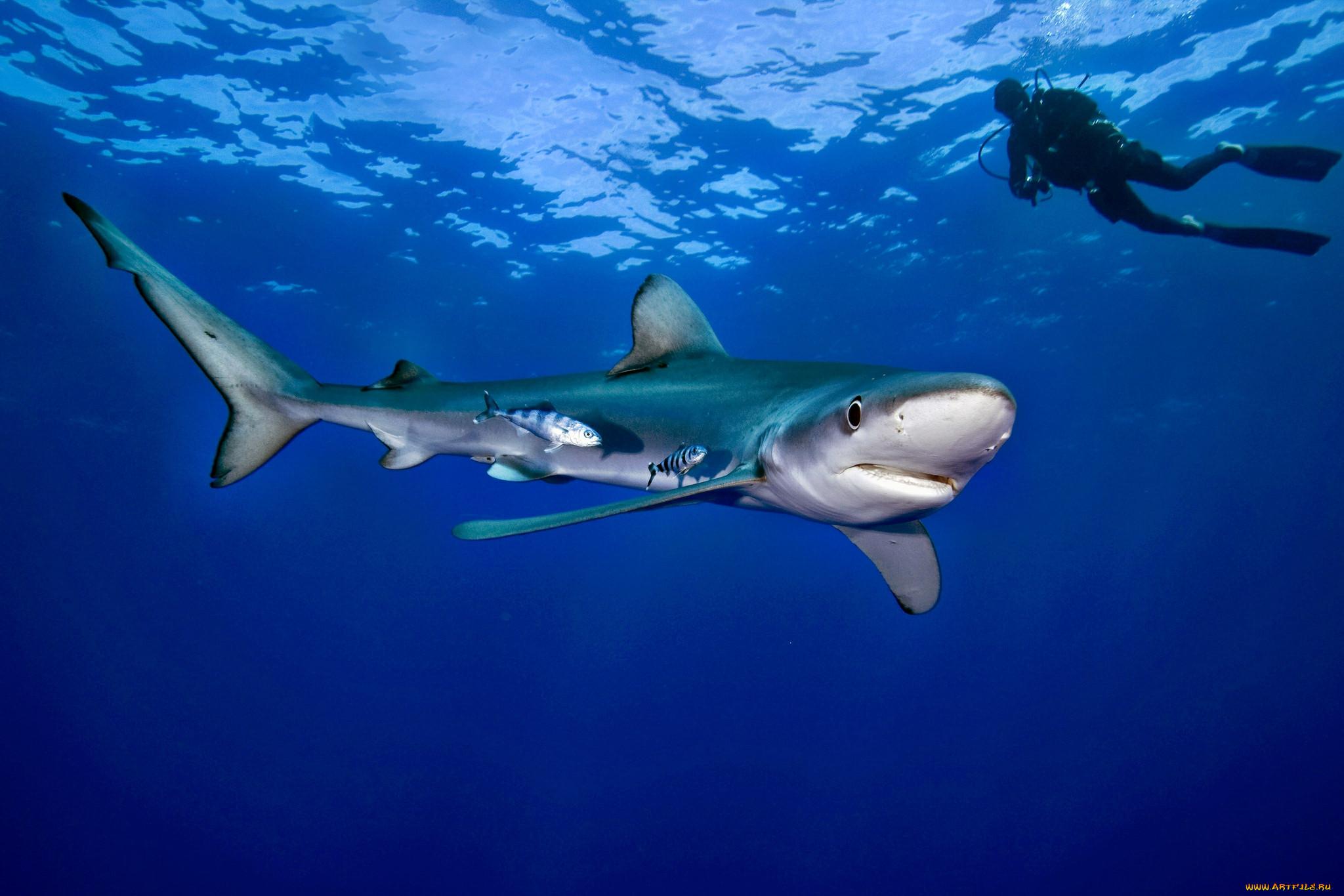 картинки акул на поверхности океана женские джинсы купить